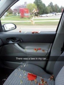 """There was a bee/wasp in my car."""